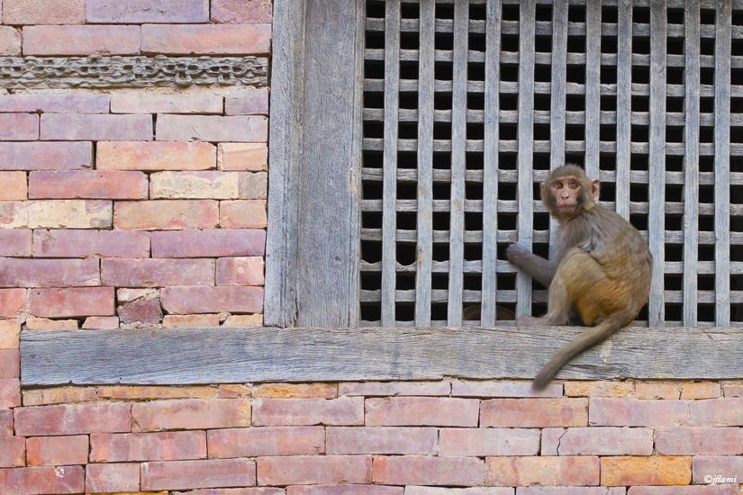 Katmandou pour Site © jflami 025